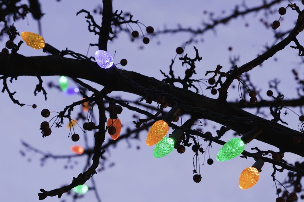 Holiday lights along silhouette of tree branch at sunset.jpeg